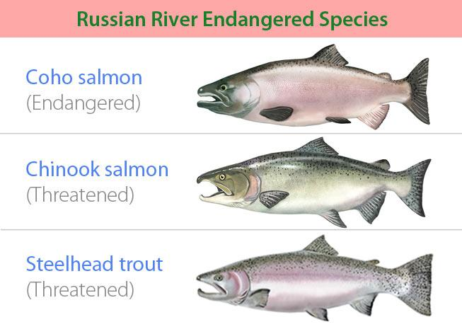 Figure 3: Endangered species native to Sonoma County's Russian River. Web domain content accessed at: http://www.scwa.ca.gov/endangered-species/